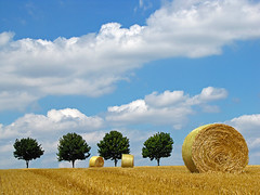 World domination ... (RainerSchuetz) Tags: trees summer clouds landscape harvest worlddomination stubblefield baleofstraw rowoftrees 100commentgroup bestofmywinners coth5 thanwetakeberlin