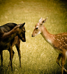 Interracial act (Faisal!) Tags: wild white black nature grass animal race forest deer dusseldorf interracial