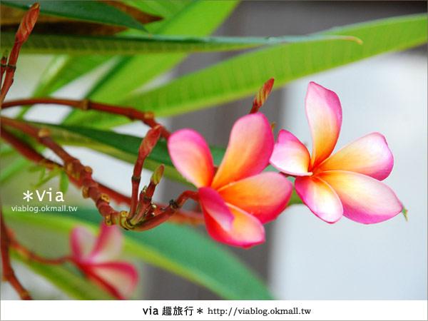【台南住宿】我在台南遇見峇里島‧桂田酒店4