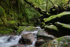 Shiratani Forest, Y