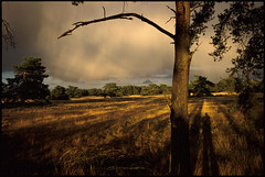 Veluwe_01 (Chris Protopapas) Tags: trees sunset holland gold arch shadows pentax lateafternoon gelderland nationaalparkdehogeveluwe godslight drumscanner smcpa28mmf28 pentaxart visipix itsnotacapture