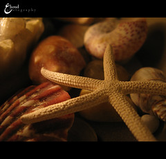 (3    d ) Tags: sea macro beach closeup canon star starfish    3houd  ohoud
