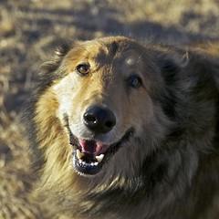 """Lady"" (Ellen Soohoo) Tags: dog lady point collie isabel amron tamron2875mmf28 tamronspaf2875mmf28xrdildasphericalif"