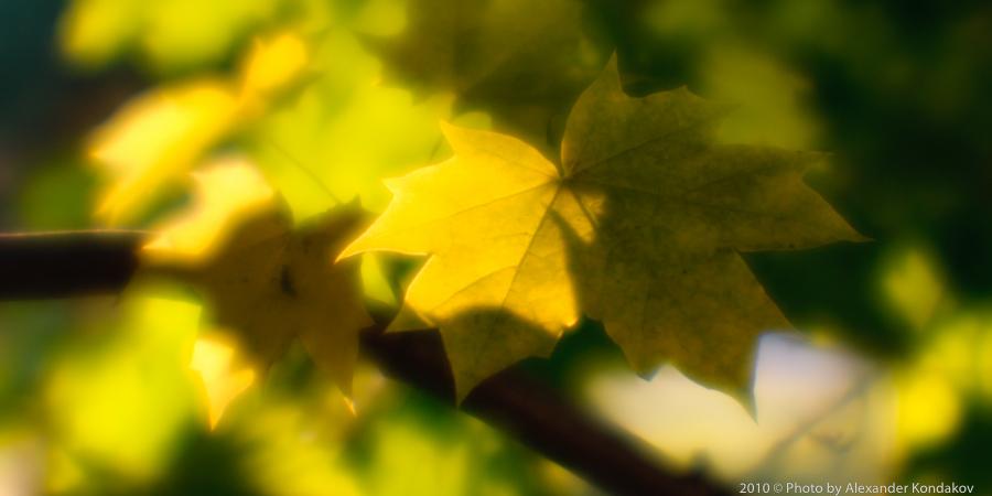 Осень.Монокль