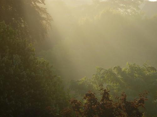 Mystic dawn