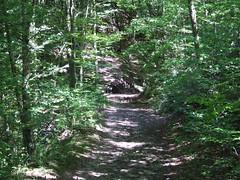 Kis híd az erdőben