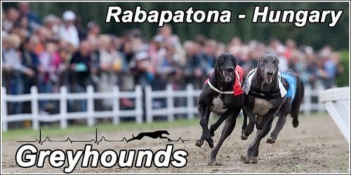 Greyhounds-Rabapatona