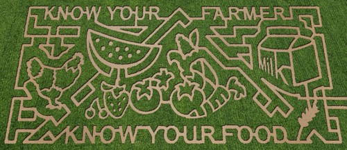 Fall 2010 Lattin Farms corn maze inspired by the USDA Know Your Farmer, Know Your Food initiative.