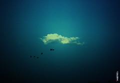 [66/183] طعم الرحيل - The taste of departure (Sada AlQuds 48) Tags: sky macro birds birdie clouds canon vintage leaving eos is alone © 100mm m rights l taste usm departure reserved ef 48 من siege sada alquds 500d ربي منا سماء غيوم رمضان القدس طيور alkaabi جميعا nouf رحيل كانون تقبل جميع طعم نوف الكعبي وداعا صدى الحقوق محفوظة الآن ~all وارتحل أتى {break أفتقده سريعاً