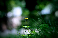 Im yours! (Rakesh Rocky) Tags: flower green beautiful canon happy 50mm daylight mood bokeh happines 50mm18