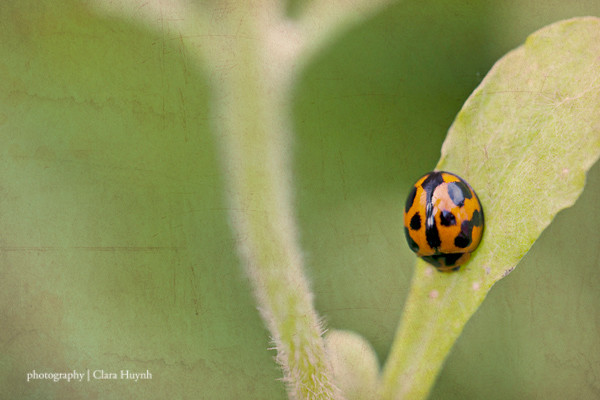 Photo A Day September - Day 14 - A Visit From A Ladybug