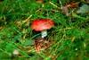 SJÖBO 2010 - 003 (Elisabeth Gaj) Tags: las nature mushroom forest skåne europa sweden natur sverige szwecja sjöbo scandynavia elisabethgaj diamondclassphotographer