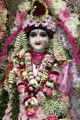 Srimati Radharani's Appearance Day - Radhastami 2010 - Bhaktivedanta Manor - 15/09/2010 - IMG_8568 (DavidC Photography) Tags: birthday uk summer england london festival temple for golden shrine hare day room sunday 15 september altar sri international heath canopy krishna krsna manor society 15th consciousness deity hertfordshire watford appearance mandir radha srisri darshan deities 2010 herts aldenham murti iskcon bhaktivedanta radharani arati radhe murtis letchmore srimati radhagokulananda radhastami internationalsocietyforkrishnaconsciousness templeroom radharanis