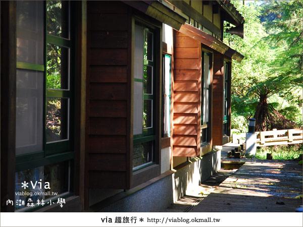 【溪頭一日遊】森林中的夢幻校園~內湖森林小學30