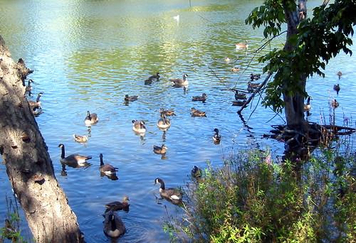 Passaic River, Paterson, NJ