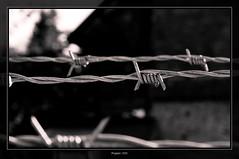 (Passage) (Magikphil) Tags: home closeup train sens vacances nikon photographie suisse noiretblanc pierre lac bretagne nb minimal jura porte passage amateur objet 2009 paysages philippe ch 2012 2010 passant vd montes iphone fermer 2011 yvonand d90 bordermaker magicphil magikphil barbellé frontière montesphilippe magicphilch