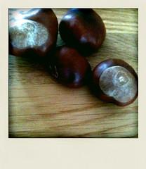 Fruits d'automne (FrédériqueL@) Tags: fruit automne marron gironde labrède septembre2010