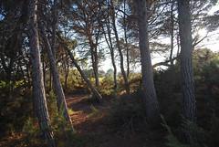 Cala en Baster, Formentera (Paul_Masters) Tags: holiday sunshine spain mediterranean naturism formentera finca holidayhome balearics naturists