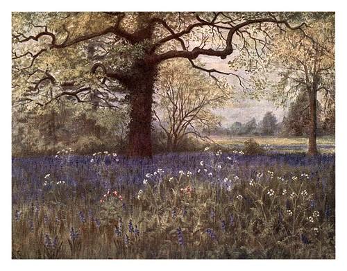 015-Jacintos silvestres-Kew gardens 1908- Martin T. Mower