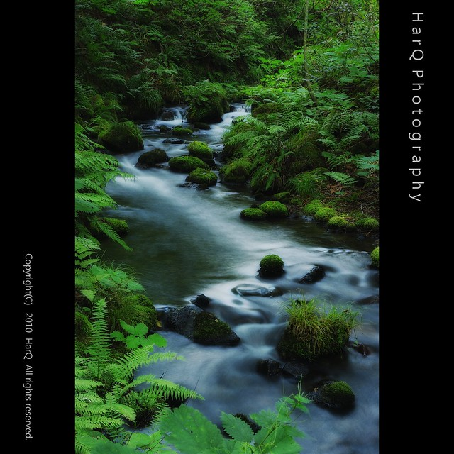 Clear Mountain Streams of Deep Daisen *