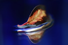 Blue Autumn (wout.) Tags: blue autumn reflection canon leaf efs60mm eos400d