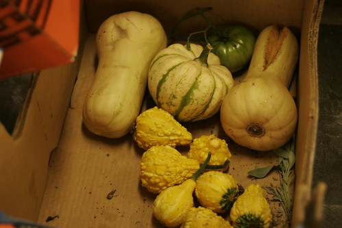 Some squash and other veggies