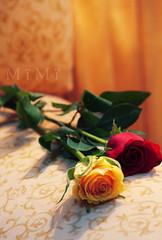 (M ï M ï) Tags: red flower focus yallow الهم الورد العطر