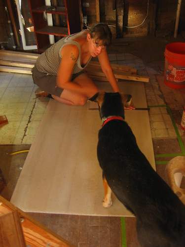 dogs love to help with renovation projects