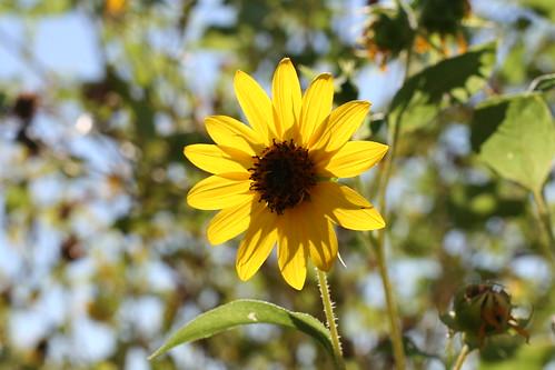 S+J's visit  -- Desert Botanical Gardens