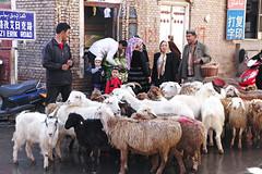 Sheep walking in Kashgar old city (inchiki tour) Tags: china street travel photo market uighur xinjiang silkroad   uyghur bazaar uyghurs centralasia oldtown  oldcity 2010