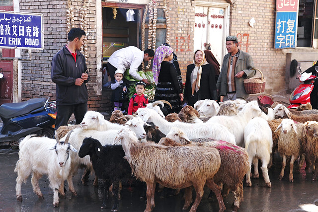 カシュガル旧市街、路地をゆく羊の群れ