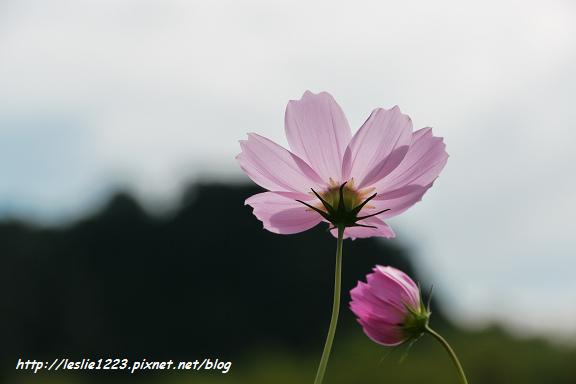 84P1120076_nEO_IMG.jpg