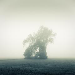 atrabiliousness (Ingo_Heider) Tags: autumn tree fog early nebel herbst silence nikkor fx morgen baum einsamkeit stille nikkon ruhe 2470 d700