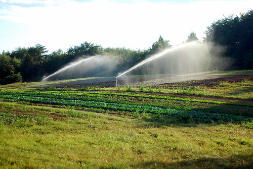 Overhead irrigation