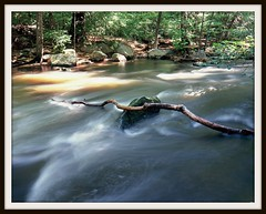 Mianus River Greenwich Connecticut (ZacharyMartinez) Tags: longexposure trees green water forest mediumformat river rocks connecticut greenwich rapids fujifilm 6x7 velvia100 twigs movingwater mamiya7 150mm mainusriver