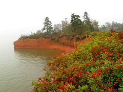 Medford Cliff (Jemsabell) Tags: cliff fog novascotia rosehips medford hightide minasbasin highesttidesintheworld qualitygold mygearandmepremium mygearandmebronze mygearandmesilver