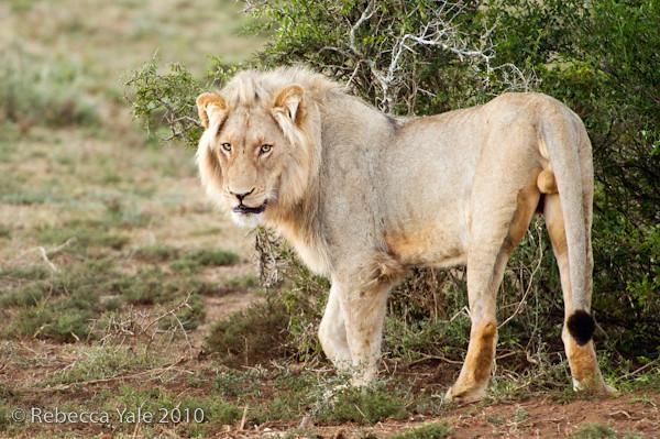RYALE_Schotia_Safaris_51