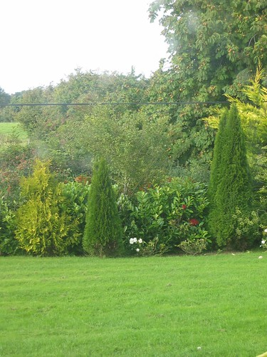 road side hedge sept 2010
