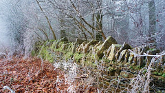 Cotswold Stone Wall (Andrew Lockie) Tags: autumn england fall stone wall mystery woodland woods broadway nopeople cotswolds stonewall cotswold