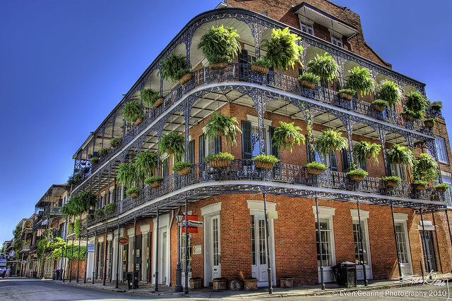 French Quarter Ferns