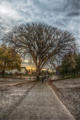 UBC Tree