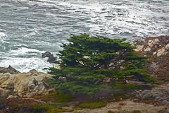 Big Sur Coast (dianejp) Tags: color fall raw waves pacificocean cypress rockypoint bigsurcoast