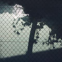 Free the tree (daliborlev) Tags: shadow tree green texture square shadows canvas brno chainlinkfence mundanedetail
