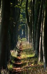 Warnsveld, Kapperallee, beukenlaan (Ben ter Mull) Tags: amsterdam herfst nederland laan eefde landgoed warnsveld gelderslandschap beukenlaan huisdevoorst bentermull devoorst wwwbentermullnl