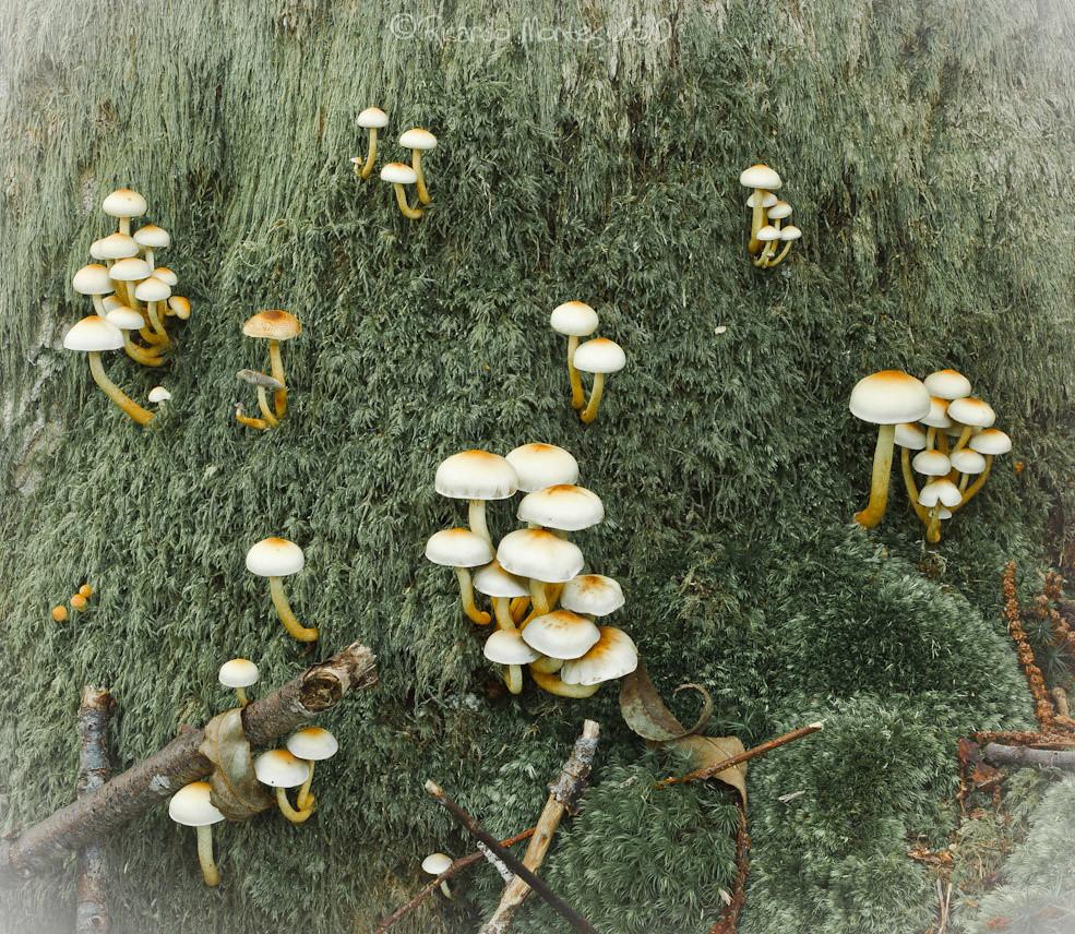 Las cosas del bosque