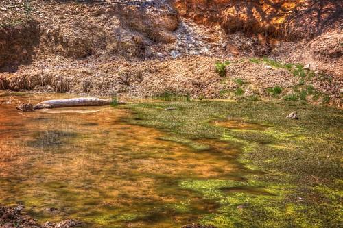 Scum pond