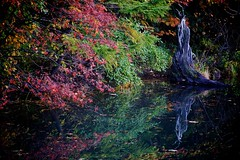 Hachimantai Pond (jasohill) Tags: autumn red anime reflection green fall film water leaves japan rural japanese pond log style miyazaki iwate animation backgrounds ghibli  tohoku 2010 hachimantai hayao platinumheartaward