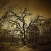 Winter Tree in Black and White Toned in Sepia by Matt Anderson Fine Art Landscape Photography
