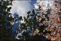 Fall, Reflected (Lyle58) Tags: blue autumn trees orange brown white lake reflection green fall nature water leaves clouds season outdoors maple seasons surface float autumnal mortonarboretum lakemarmo lisleillinois