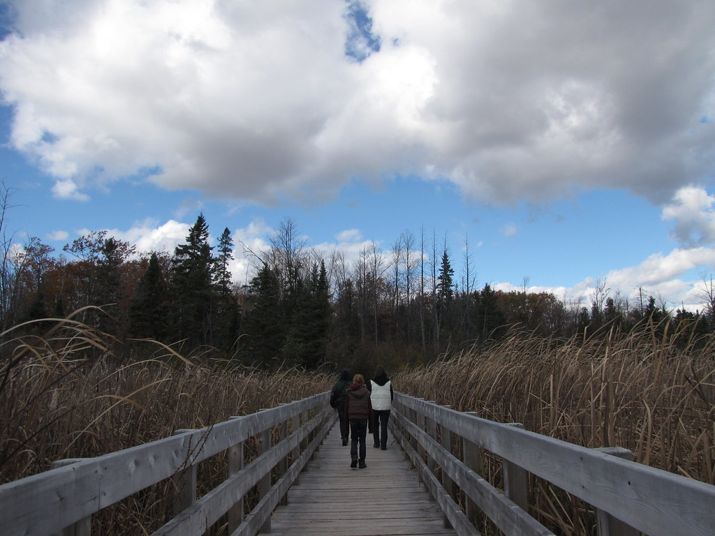 Hiking the Jack Pine